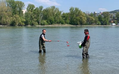 Seeking eDNA in Danube and Morava rivers
